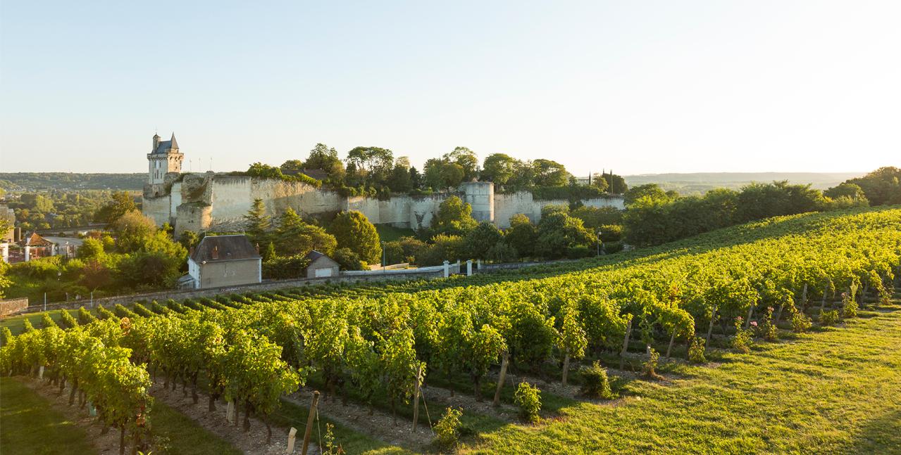 卢瓦尔河谷葡萄园