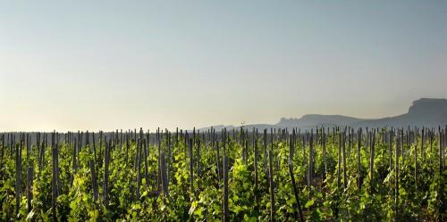 普罗旺斯9个酒庄的照片,酒美景也美
