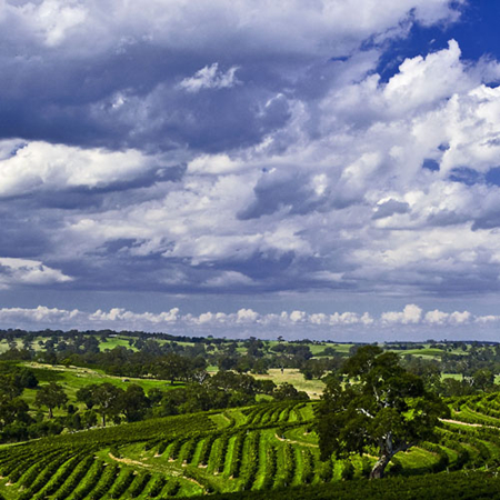 南澳州产区葡萄种植历史