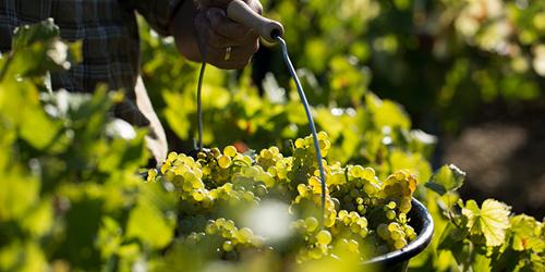 地中海秘境:探寻马耳他美酒