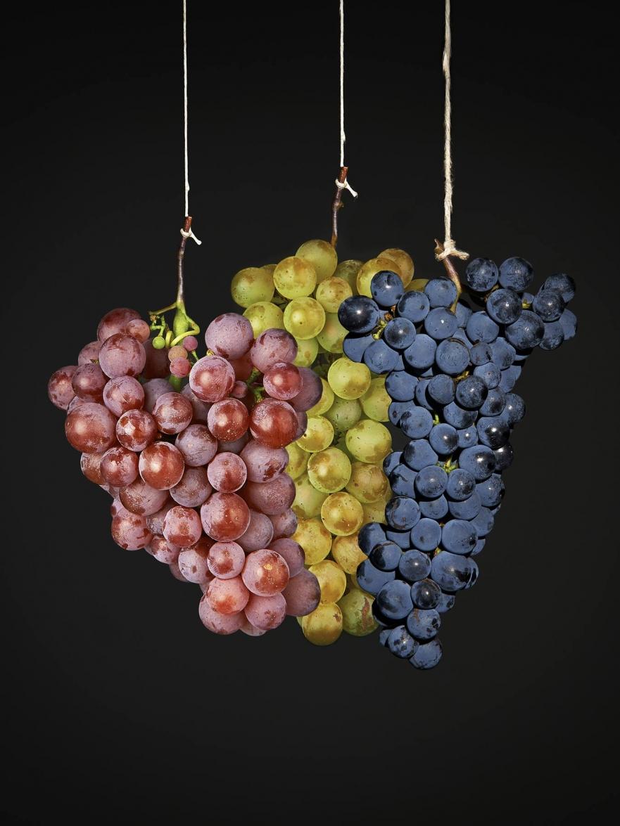 十大最常见的酿酒白葡萄品种