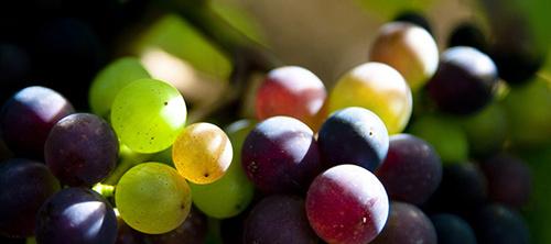 黑皮诺与赤霞珠:喝哪一种比较好?