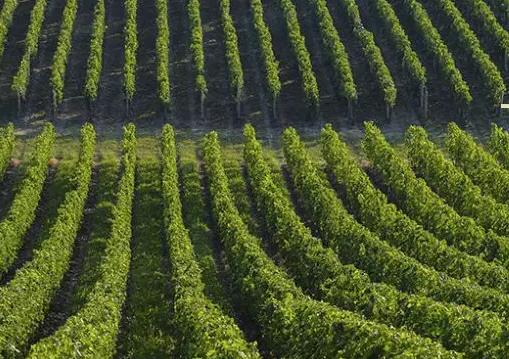 2017七大值得一游的葡萄酒旅游胜地