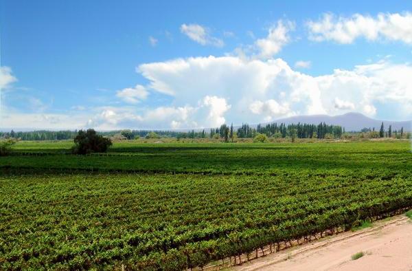 习主席访阿根廷,阿根廷葡萄酒你喝了吗?