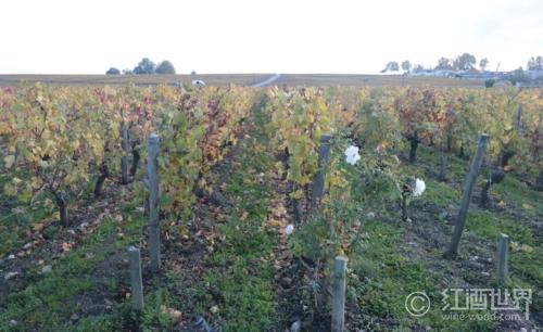 葡萄酒世界两大阵营:旧世界和新世界