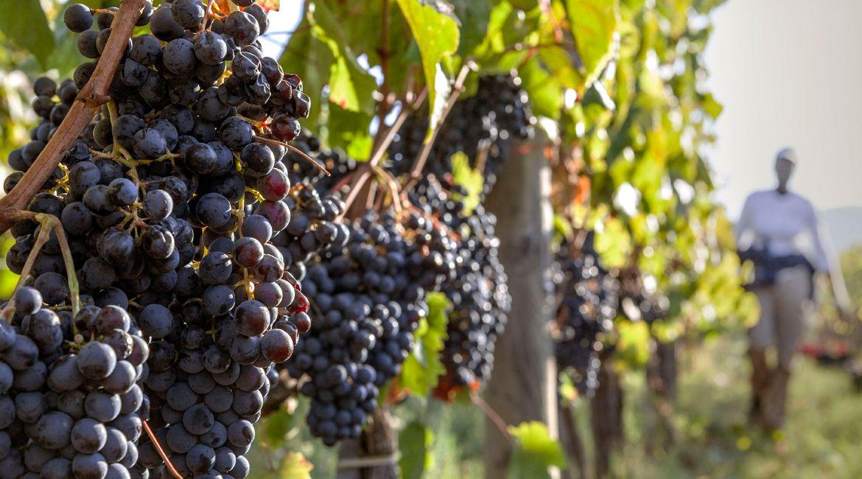 走南串北看红酒:细数意大利最重要的红葡萄酒