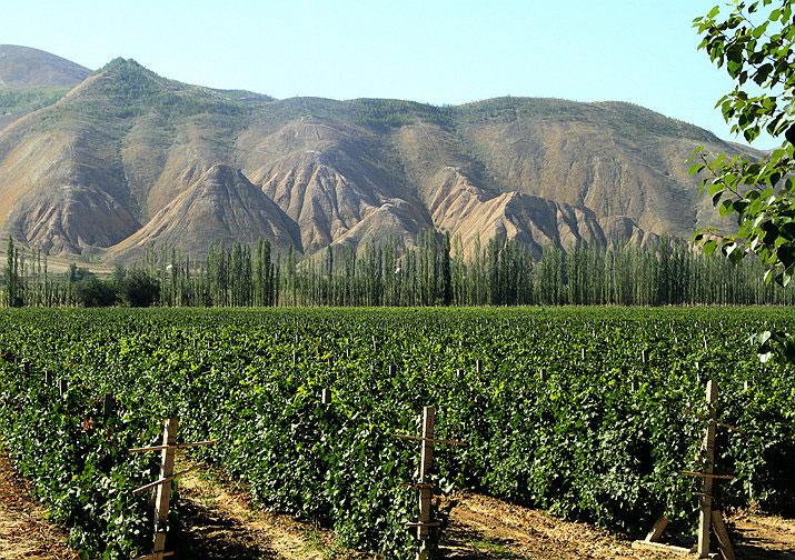 崛起中的中国葡萄酒产区