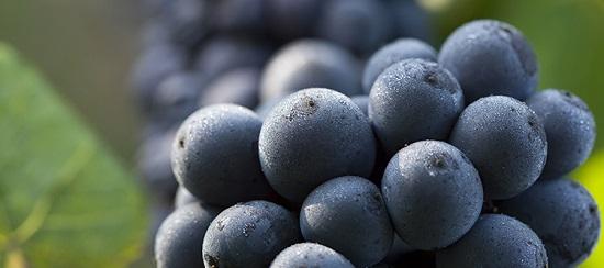 新世界黑皮诺果香浓郁 勃艮第红酒优雅微妙