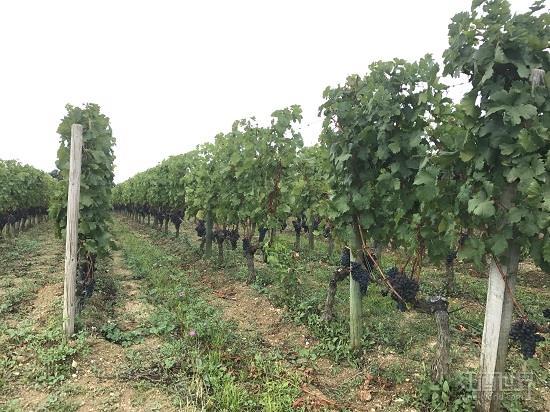 法国最著名的6大产区葡萄酒