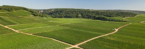 勃艮第黃金產區——金丘