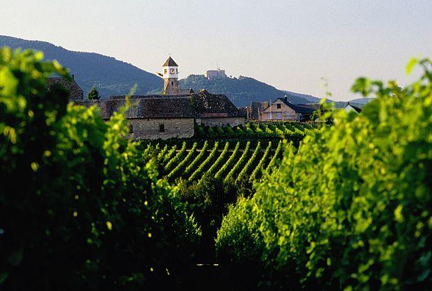 不可不知的十大葡萄酒产国