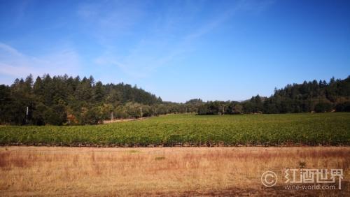 一个充满自由与灵气的葡萄酒产区——索诺玛