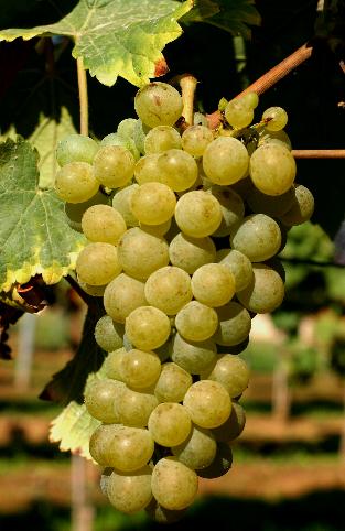 十问十答,全方位掌握卢瓦尔河谷葡萄酒