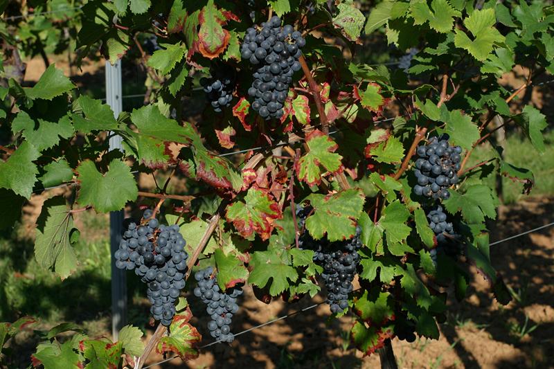 2011年意大利葡萄酒产区年份报告