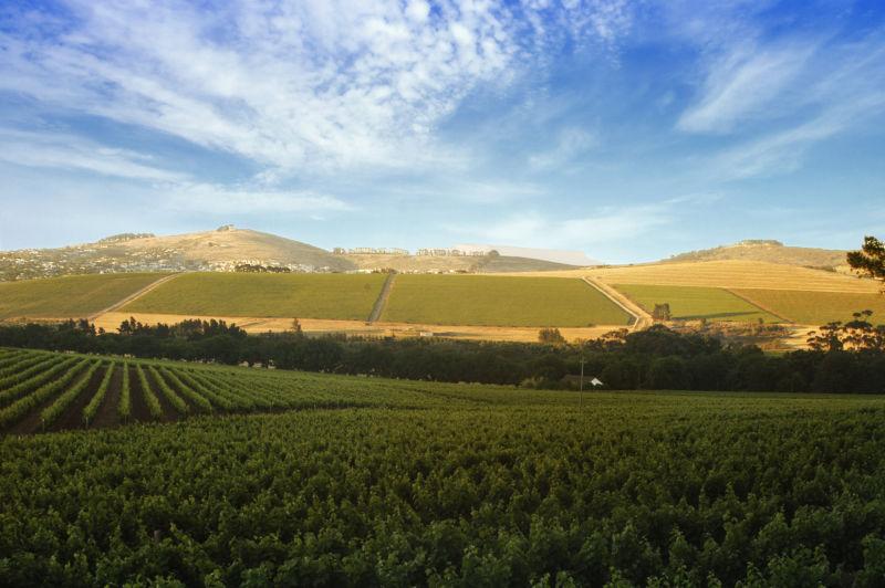 自然的南非,花样的美酒