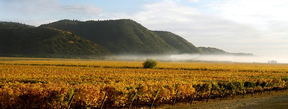 智利知名的酒业集团
