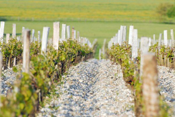 2015何以成为玛歌酒庄历史性的好年份?