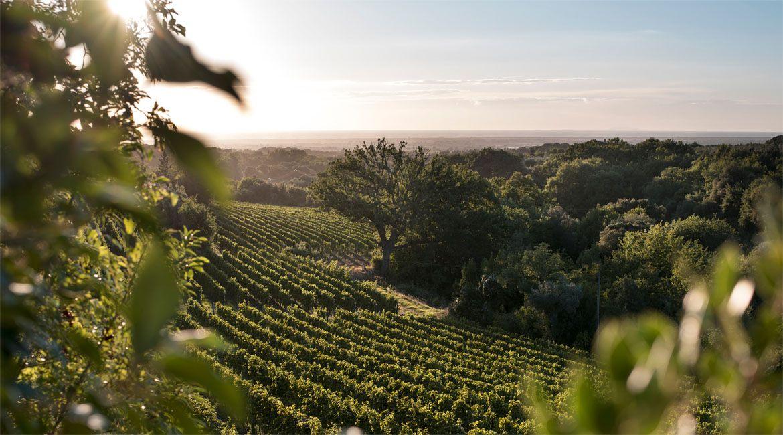 10个选择题,看看你对意大利葡萄酒有多了解