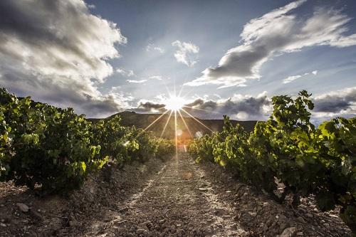 西班牙葡萄品种全攻略