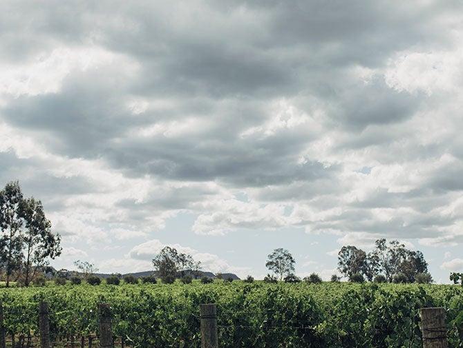 猎人谷——澳洲最古老的葡萄酒产区
