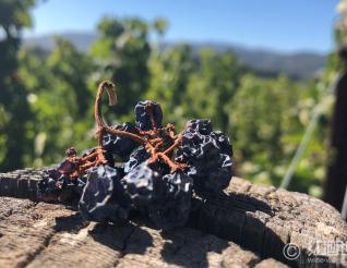 指点江山,那些惊才绝艳的老藤葡萄酒!