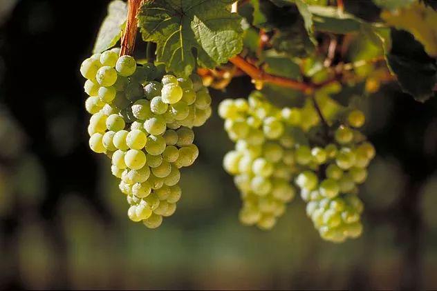 你的葡萄酒可以陈年吗?