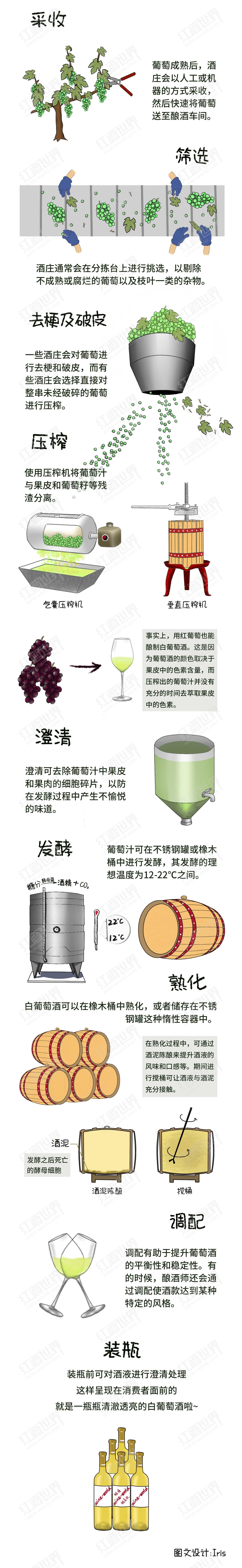一张图揭秘白葡萄酒的酿造过程