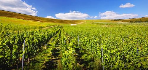 史蒂芬·史普瑞尔——影响葡萄酒世界格局的传奇人物