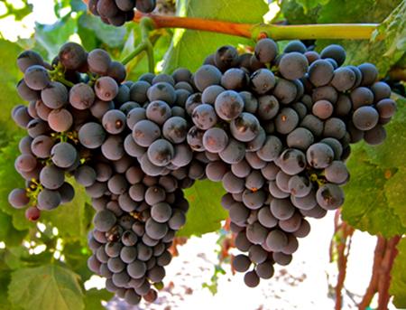 南美除了智利与阿根廷,还有这个产区和这些葡萄!