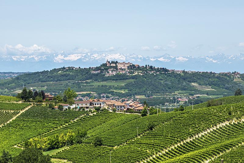 2012年份孔特诺法国农场巴罗洛红葡萄酒