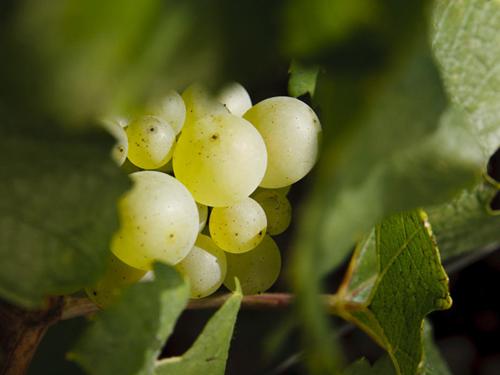 世界知名葡萄酒专业院校