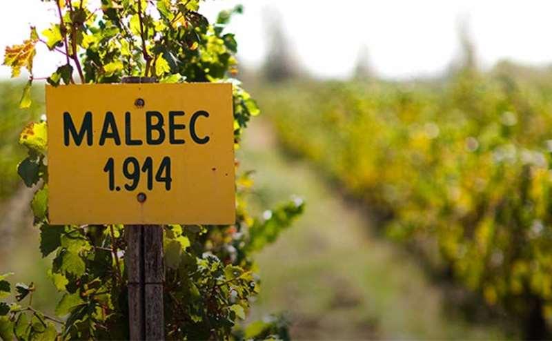 阿根廷葡萄酒领军者尼古拉斯·卡帝那