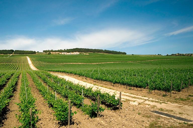 走近四大海岛葡萄酒产区