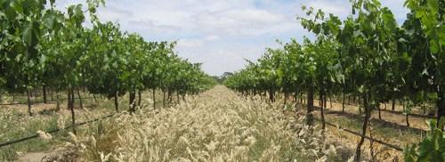 澳大利亚葡萄酒选购关键——产区&品种