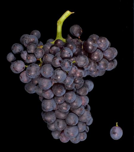 精华指南:歌海娜葡萄酒