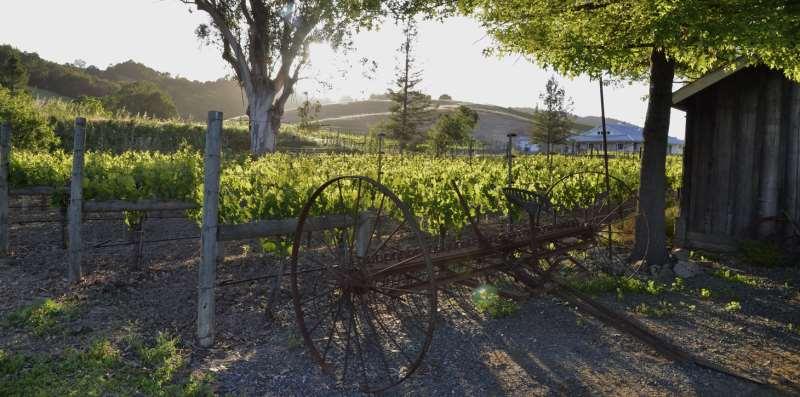 全球葡萄酒产量下滑3% ,中国产区不减反增