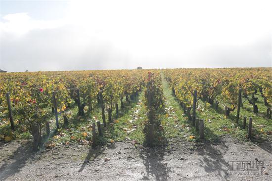 历经2年沧桑,法国终于迎来葡萄丰收年