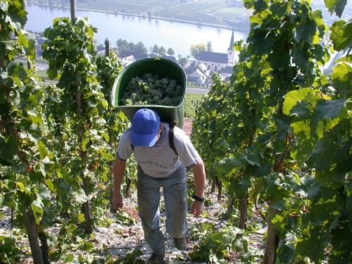 為什么有些葡萄酒的價格更高?