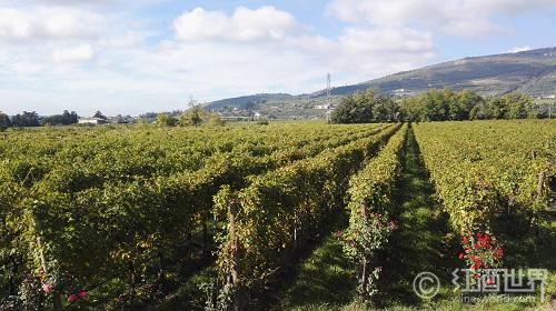 一句话概括旧世界葡萄酒生产国的特色