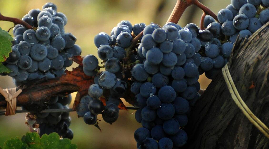 想要收藏葡萄酒?先从意大利开始吧!