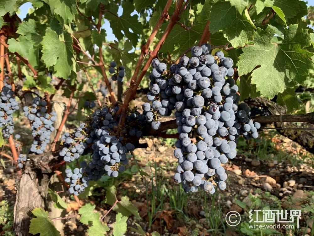 加州北海岸鲜为人知的葡萄酒产区