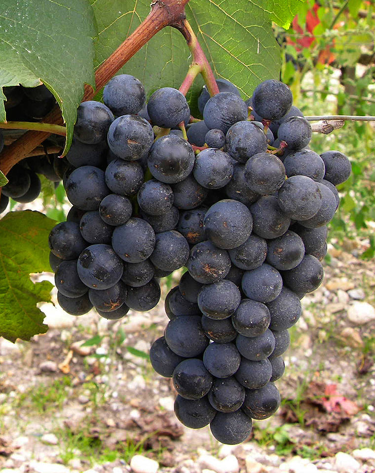 焦点报道:阿根廷葡萄酒10大要点