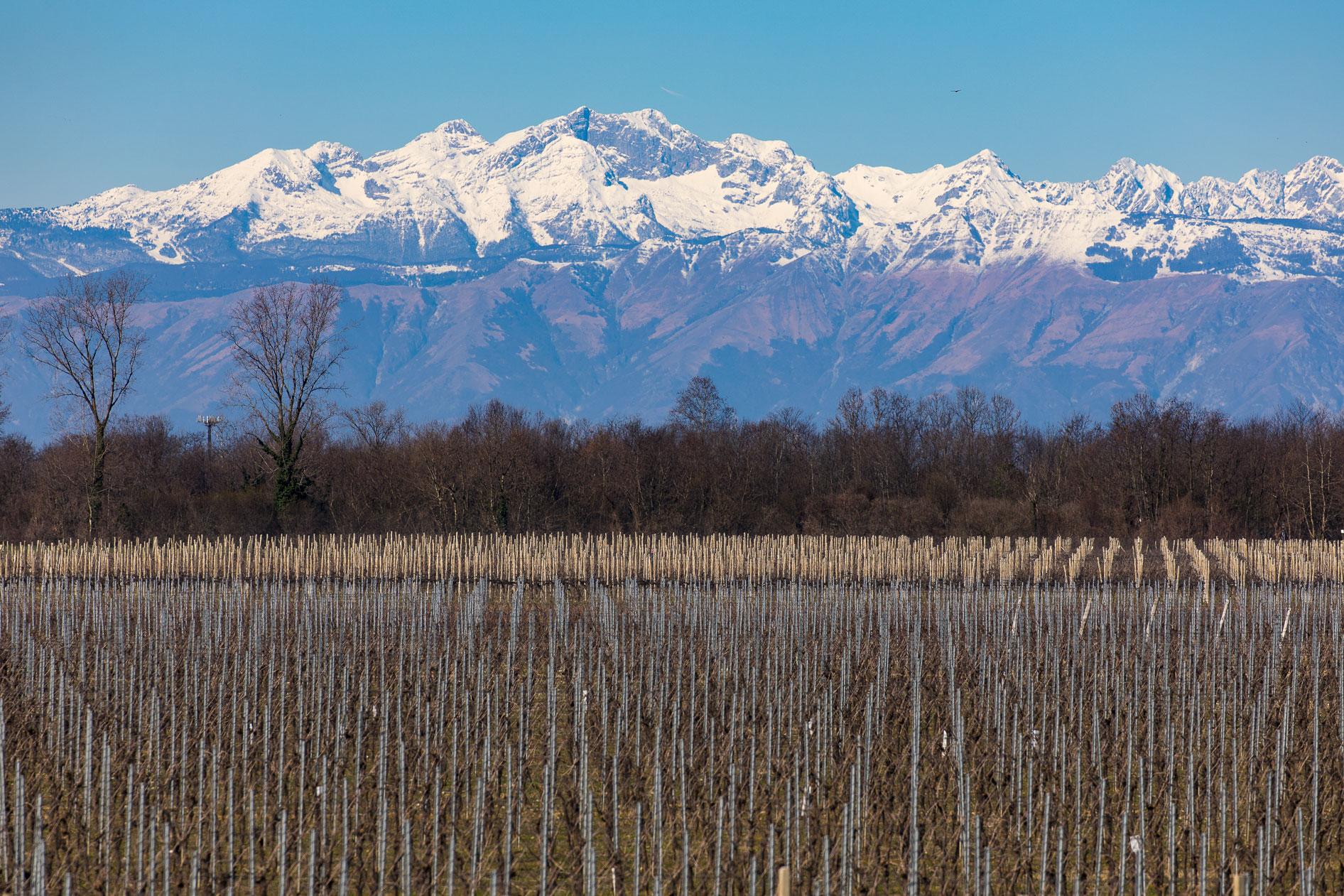 弗留利-威尼斯-朱利亚:意大利白葡萄酒天堂