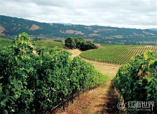 意大利古井惊现公元前的葡萄籽和葡萄酒桶