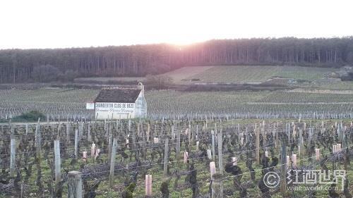 细数勃艮第的33座特级葡萄园