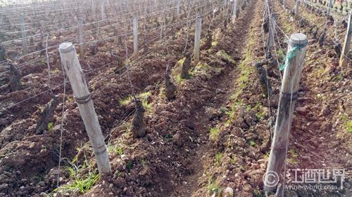 葡萄酒中常见的6种矿物质香气