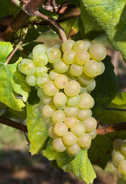 法国葡萄酒——勃艮第产区概览