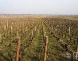 1996年份拉芳吉热那弗耶(默尔索一级园)白葡萄酒