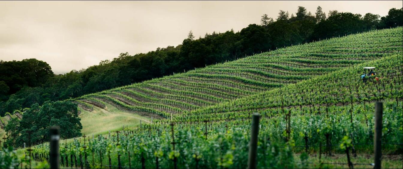 纳帕谷葡萄酒先驱:约瑟夫菲尔普斯酒庄