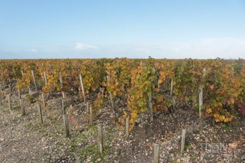 土地资源稀缺导致加州葡萄园价格飙升